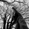drevo2